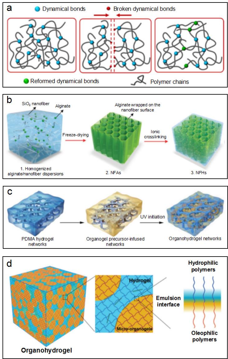 北京航空航天大学:仿生多尺度功能水凝胶的设计与制备:从二维界面到三维网络